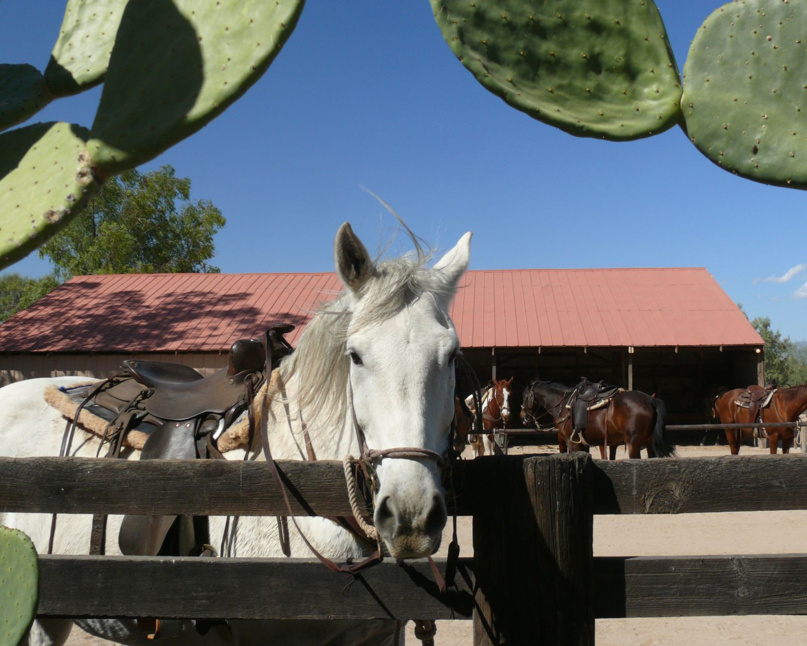 horse in the corral at our dude ranch