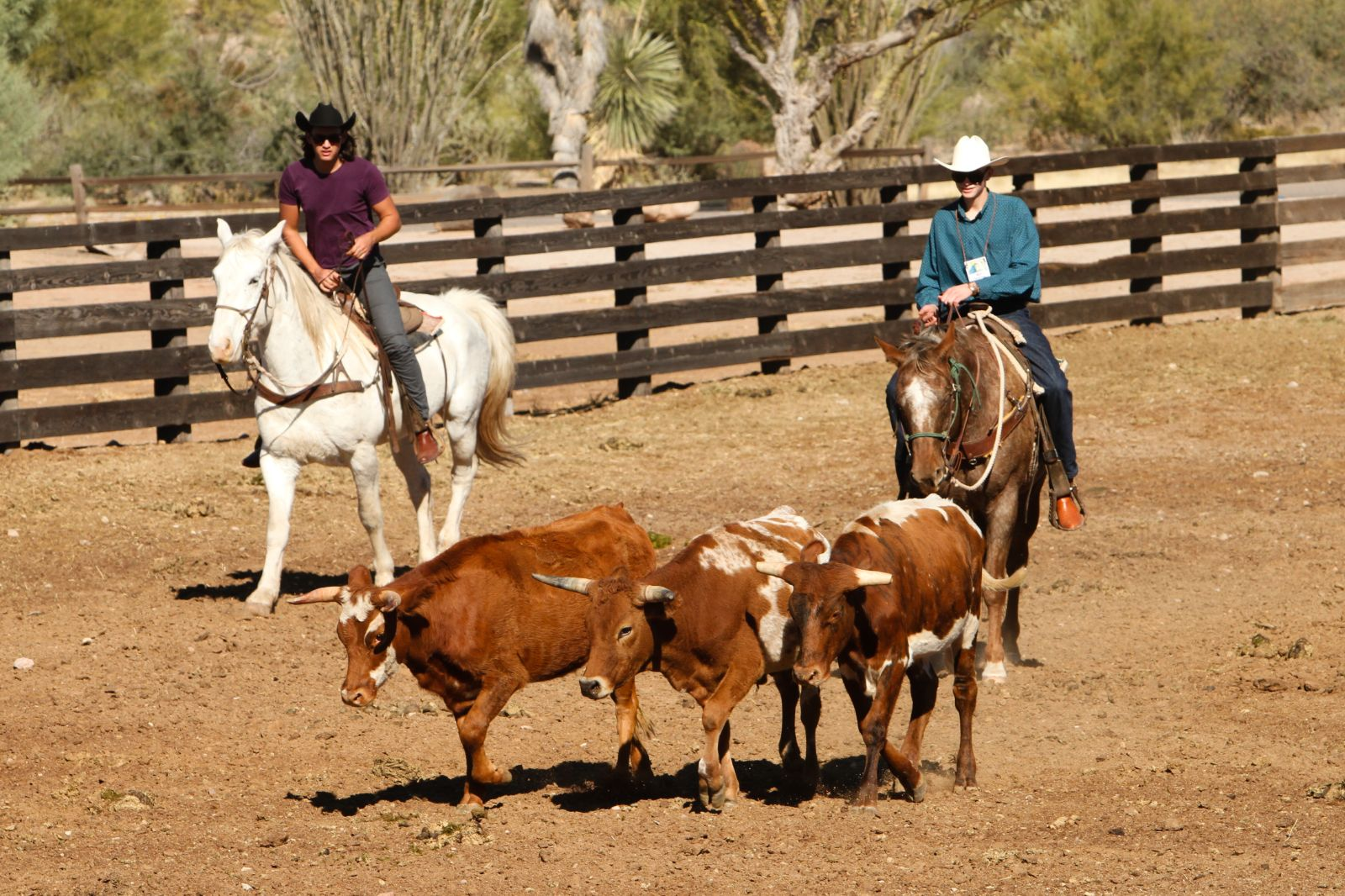 Team Penning at Rancho de los Caballeros