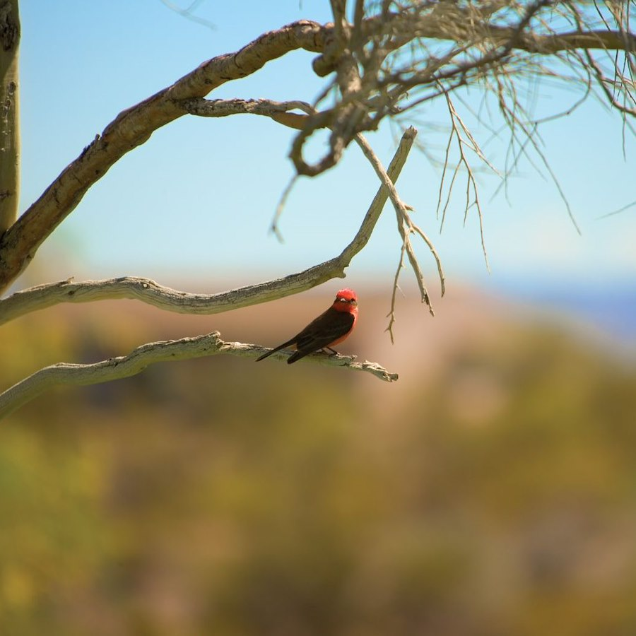 Bird Watching in Wickenburg, AZ