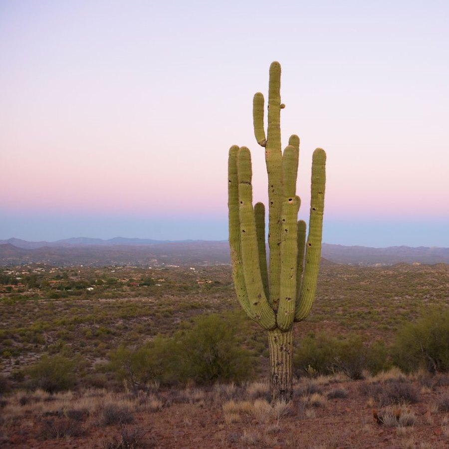 Nature of the sonoran desert in Wickenburg AZ